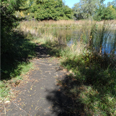 Trail by lake