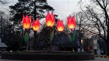 Tulips in fountain 1t.jpg