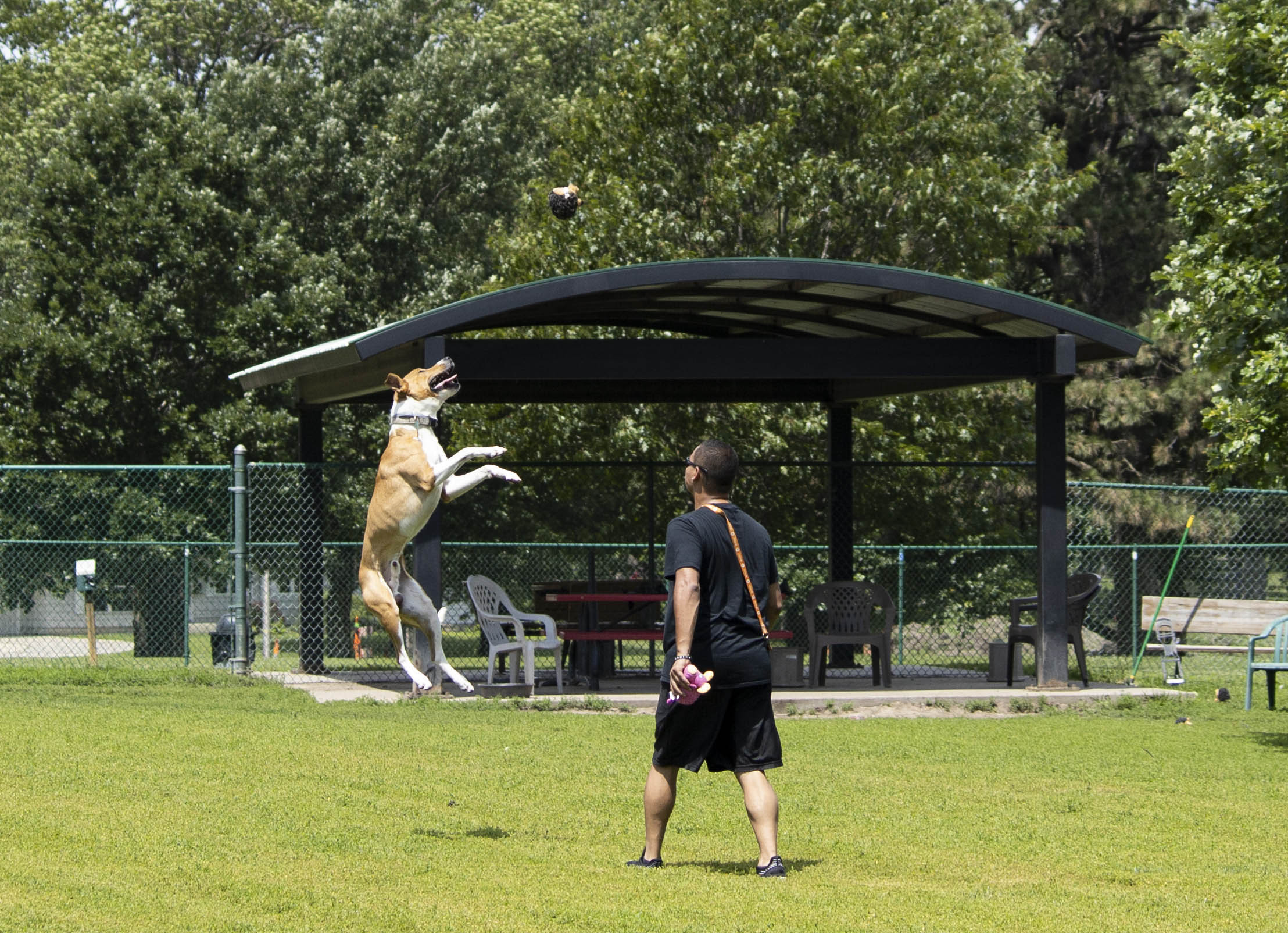 Man with dog leaping in air